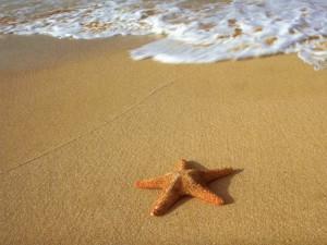 starfishonthebeach9